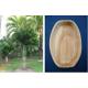 Piatti e ciotole in foglia di palma